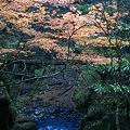 Photos: 魚止の滝