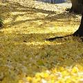 Photos: 黄色いカーペット